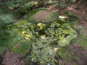 Zelené jezírko