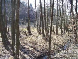 podmáčená niva potoka, březen 2007