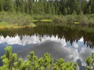 největší jezírko Tříjezerní slati, srpen 2010