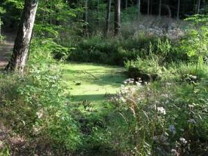 Zarůstající jezírko, září 2008