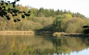 rybník Hvížďalka