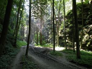údolí podél Veseckého potoka