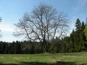 Schönwaldská huť, duben 2009
