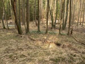 Olšina s bledulí jarní, březen 2015