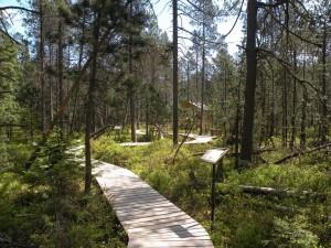 Naučná stezka Podkovák - povalový chodníček, květen 2011