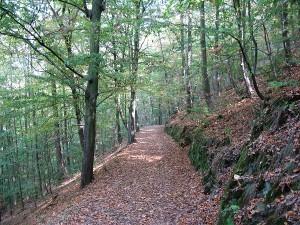 Cesta listnatým lesem, září 2009